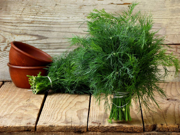 bunch of dill on wooden background bunch of dill on wooden background dill stock pictures, royalty-free photos & images