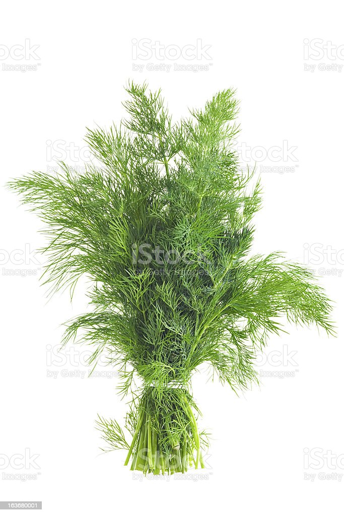 Bunch Of Dill royalty-free stock photo