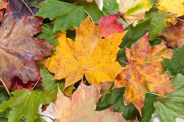 Bunch of dried colorful autumn leaves stock photo