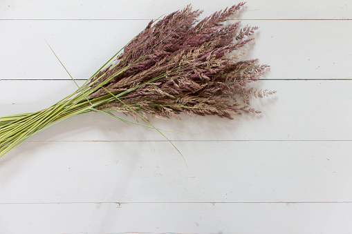 Bunch of dry grass, reeds on grey wooden background with copy space