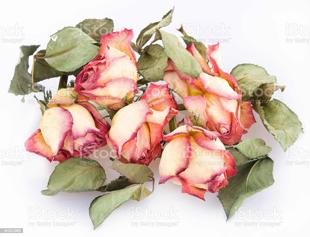 Bunch of dry roses royalty-free stock photo