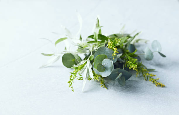 Bunch of Eucalyptus Leaves, Wild Olive and wild yellow flowers. Copy space stock photo