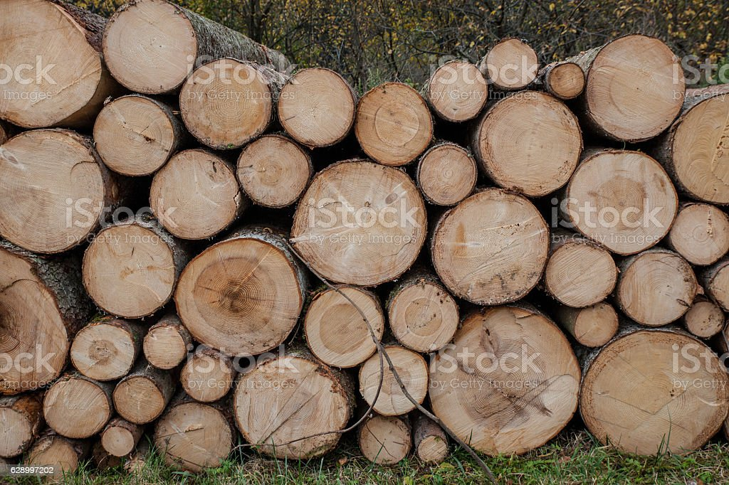 bunch of felled and cut trees stock photo