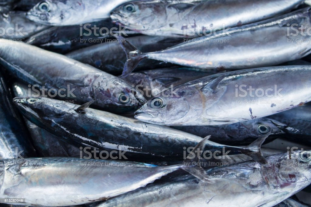Bunch of fishes. Sea fishes pile on seafood market. Fresh sea fish for sell. stock photo