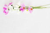 istock Bunch of flowers 876078078