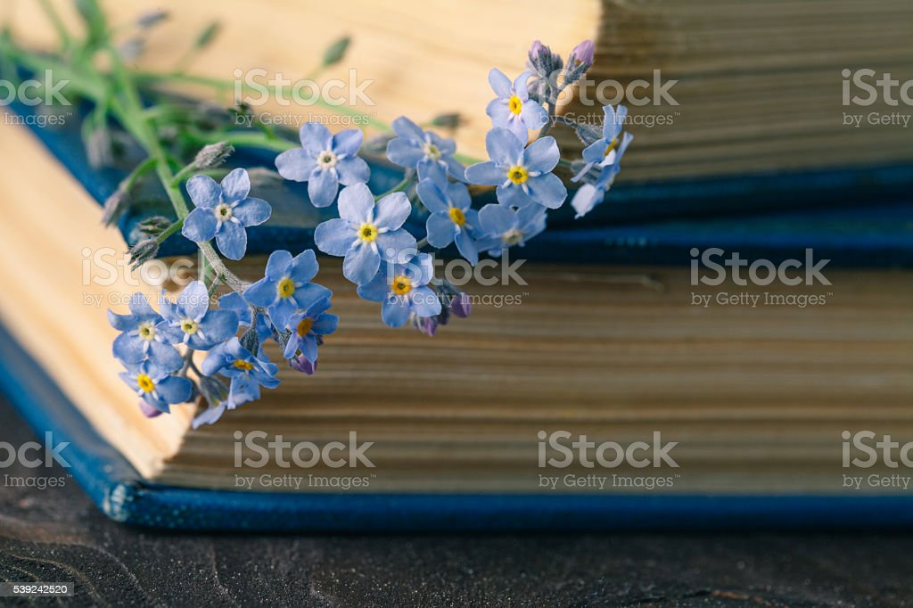Bunch of forget-me-nots flowers and very old book foto de stock libre de derechos
