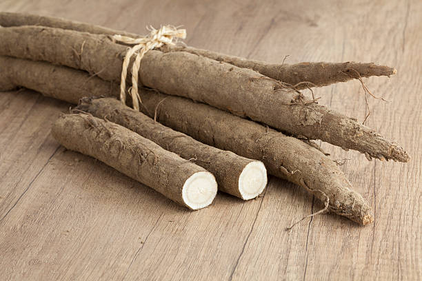 Bunch of fresh burdock taproots - Photo