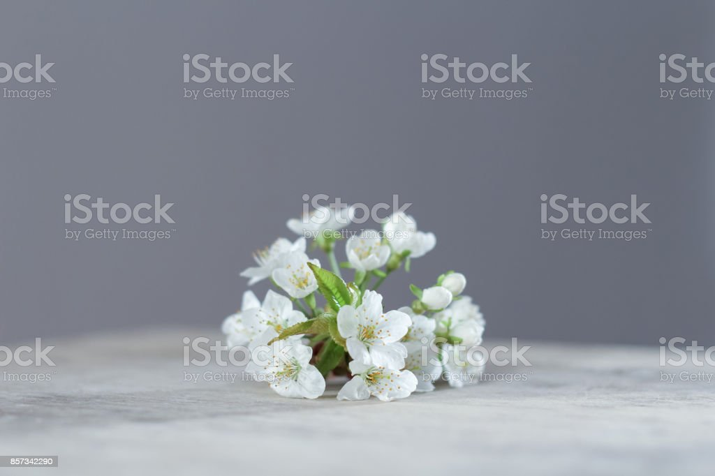 A bunch of fresh cherry flowers on a wooden rustical table stock photo