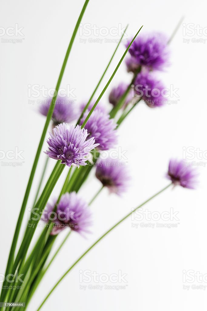 Bunch of fresh chives on table stock photo