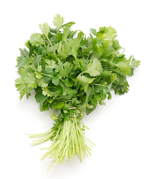 bunch of fresh cilantro bunch of fresh cilantro on white background cilantro stock pictures, royalty-free photos & images
