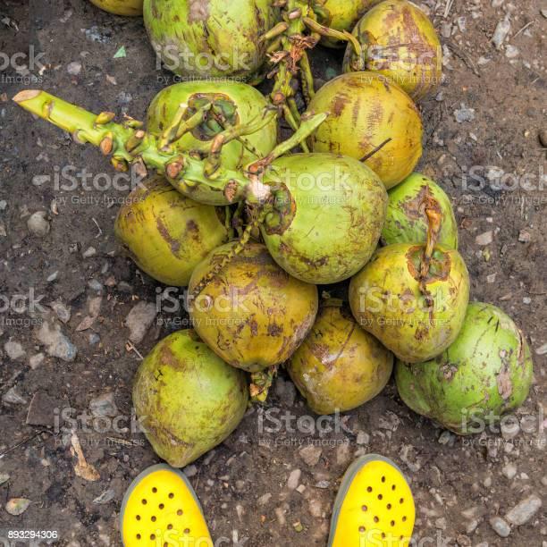 Bunch of fresh coconuts picture id893294306?b=1&k=6&m=893294306&s=612x612&h=v6irrlnhhnke3ca8z3tuuchktcixcammzdrdpne 5i8=