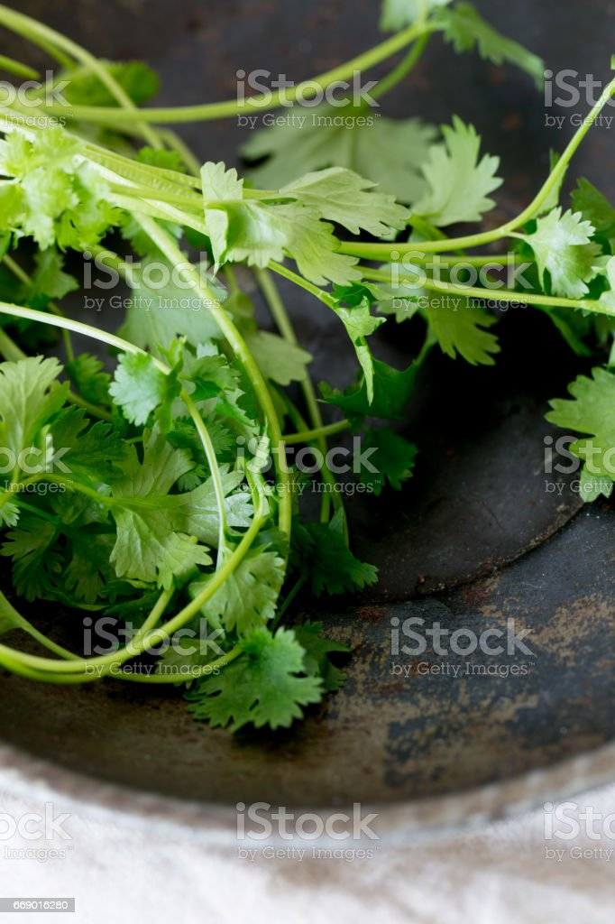 Bunch of fresh coriander on a old table