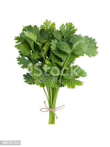 Group of cilantro sprigs tied together isolated on white background