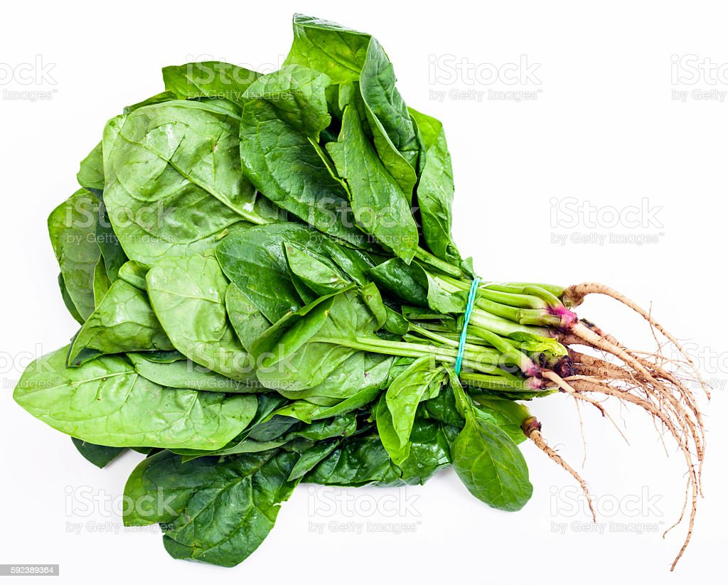 bunch of fresh cut spinach herb on white stock photo