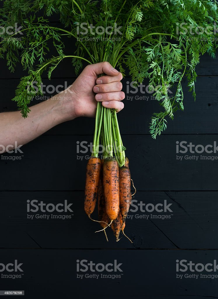 Bunch of fresh garden carrots with green leaves in the stock photo