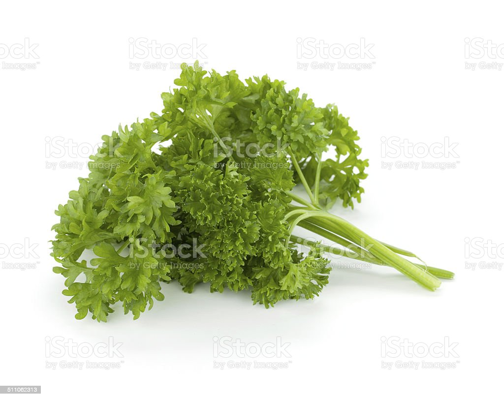 Bunch of fresh green curly parsley stock photo