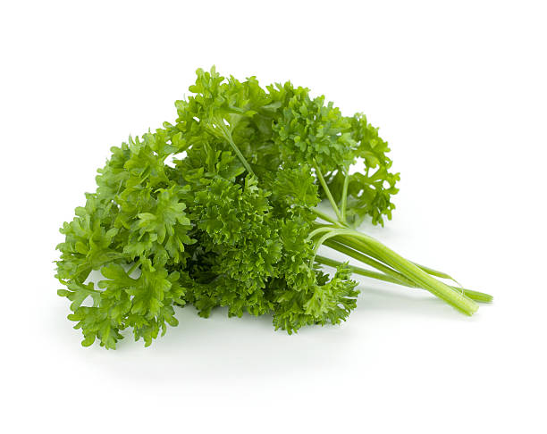 bunch of fresh green curly parsley - parsley stock photos and pictures