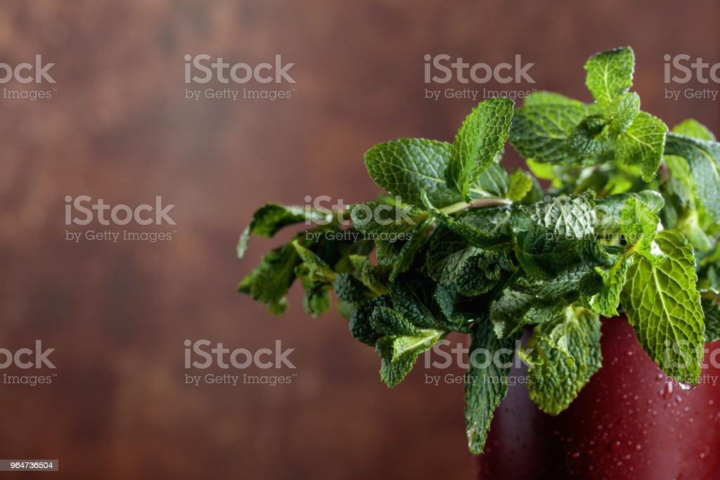 Bunch of fresh green organic mint . royalty-free stock photo