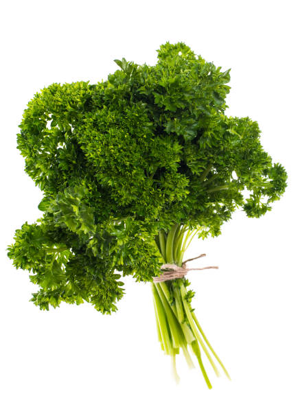 a bunch of fresh green parsley on white background - parsley stock photos and pictures