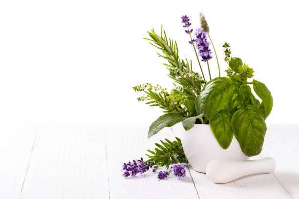 bunch of fresh herbs - menta erba aromatica foto e immagini stock
