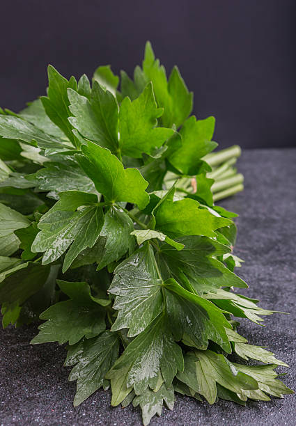 Bunch of fresh lovage leaves stock photo