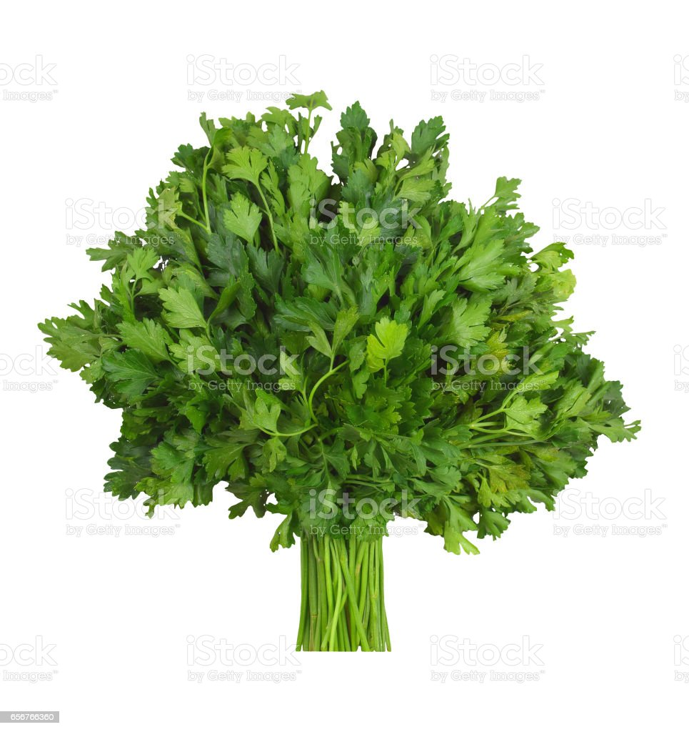 A bunch of fresh parsley, isolation . Cilantro. stock photo