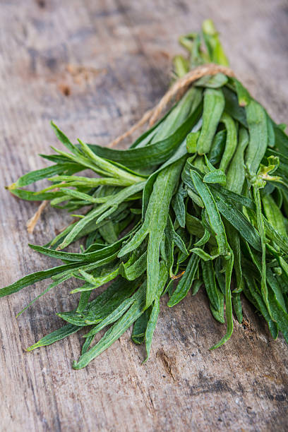 bunch of fresh tarragon - tarragon stock photos and pictures