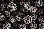 Bunch of delicious frozen blackberries close up