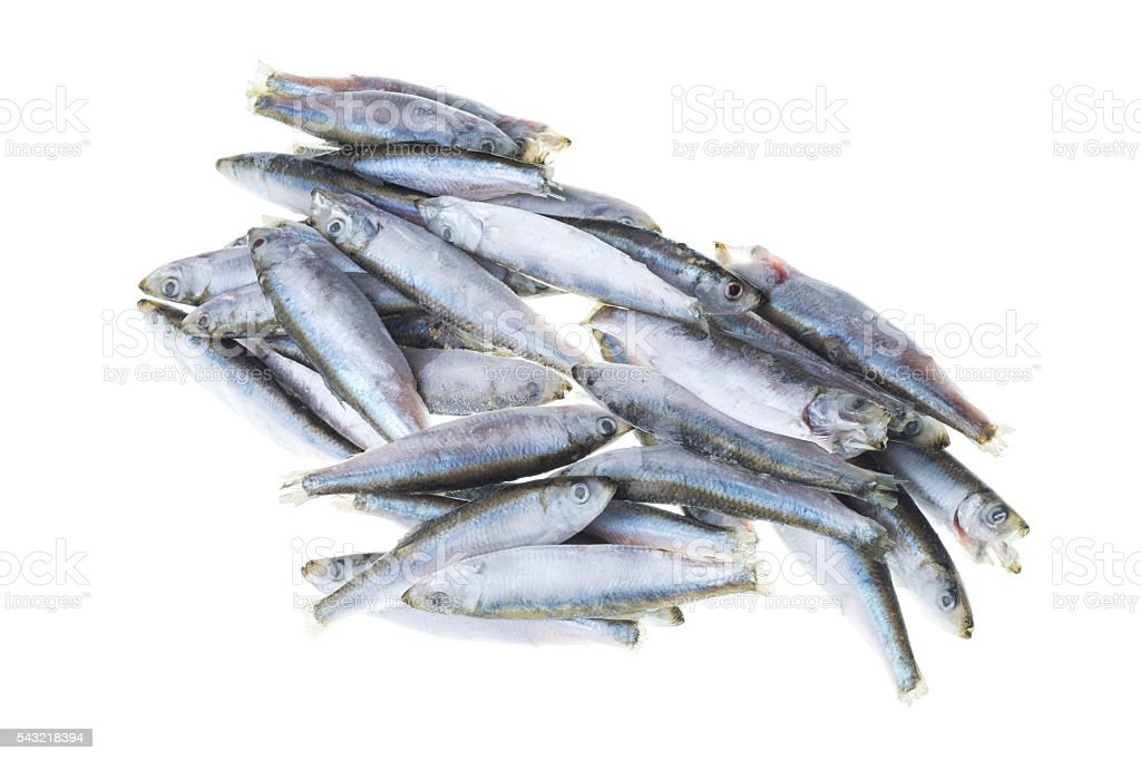 Bunch of frozen sprat fish isolated on white background stock photo