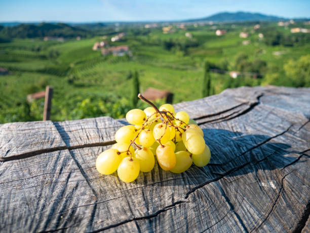 Bunch of grapes on the wooden table. Italian vineyards background stock photo