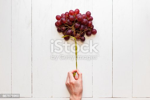 istock A bunch of grapes tied with a ribbon in a woman's hand on a white wooden background. View from above. Grapes like balloons. The concept of easy and healthy food 667575950