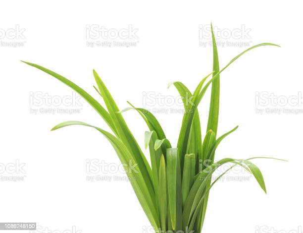Photo of Bunch of green grass.