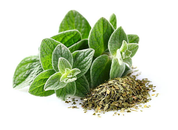 Bunch of ground oregano with green oregano leaves Fresh and dried oregano spices oregano stock pictures, royalty-free photos & images
