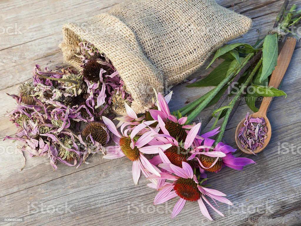 bunch of healing coneflowers and sack with dried echinacea stock photo