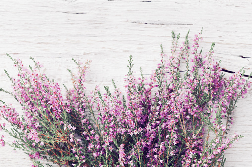 Bunch of heather flower (calluna vulgaris, erica, ling) on shabby wooden table top view. Greeting card in vintage style.