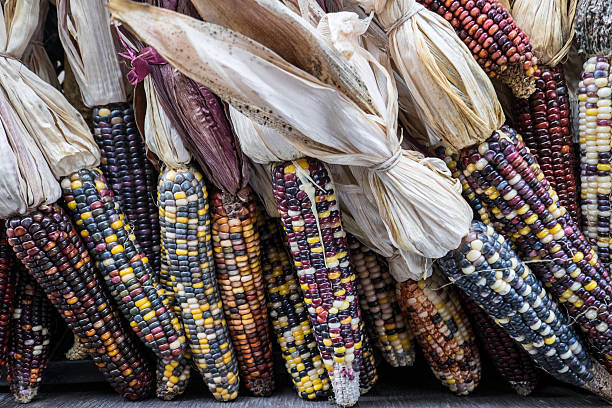 Bunch of Indian Corn stock photo