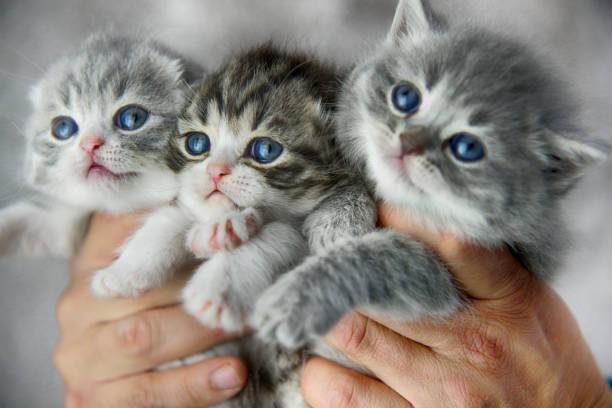 Bunch of Kitties stock photo