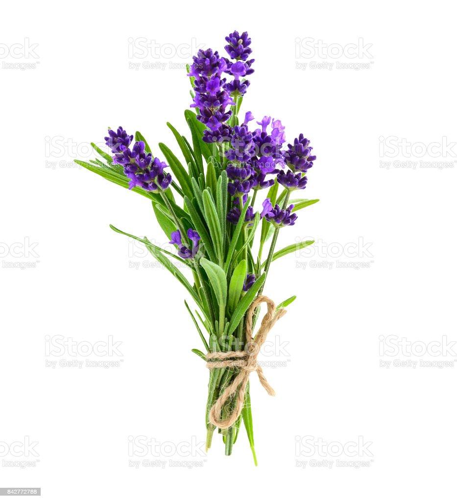Bouquet de fleurs de lavande isolé sur un blanc photo libre de droits