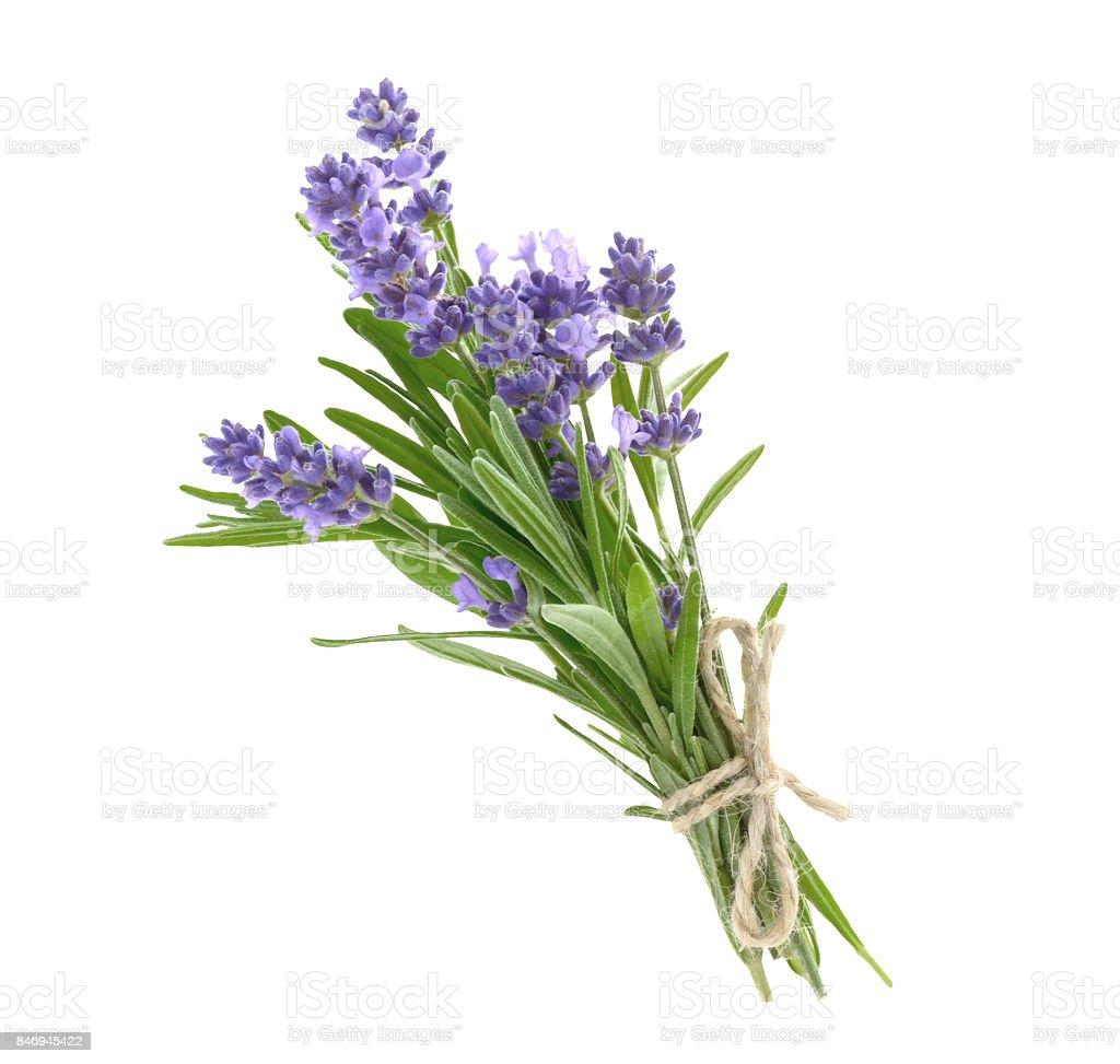 Bunch of lavender flowers isolated on a white stock photo