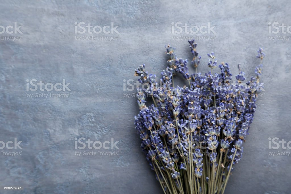 Bunch of lavender flowers on grey background stock photo