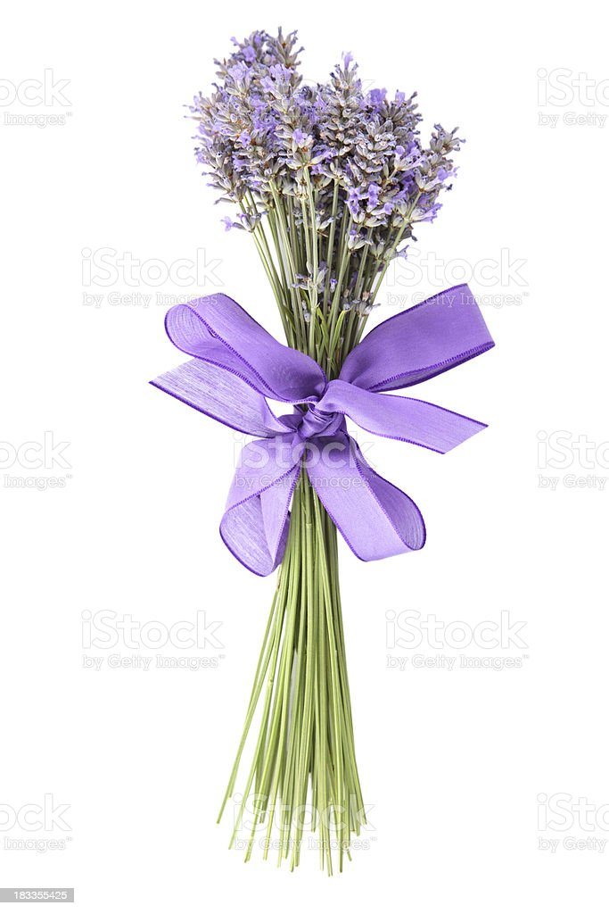 Bunch of lavender on white background stock photo
