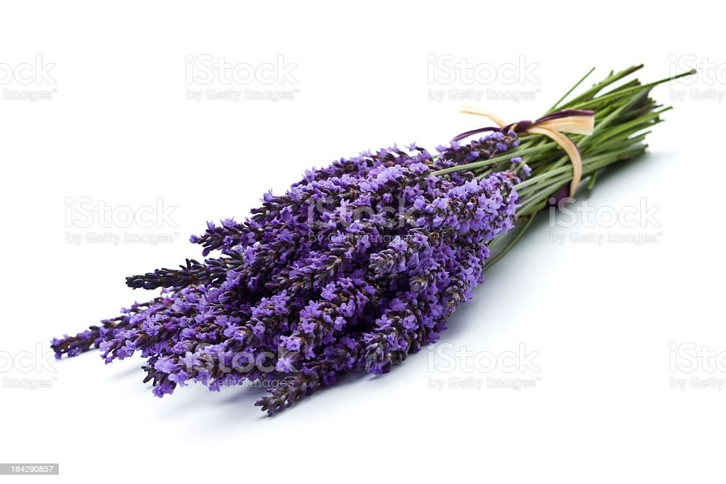 Bunch of lavender tied together royalty-free stock photo