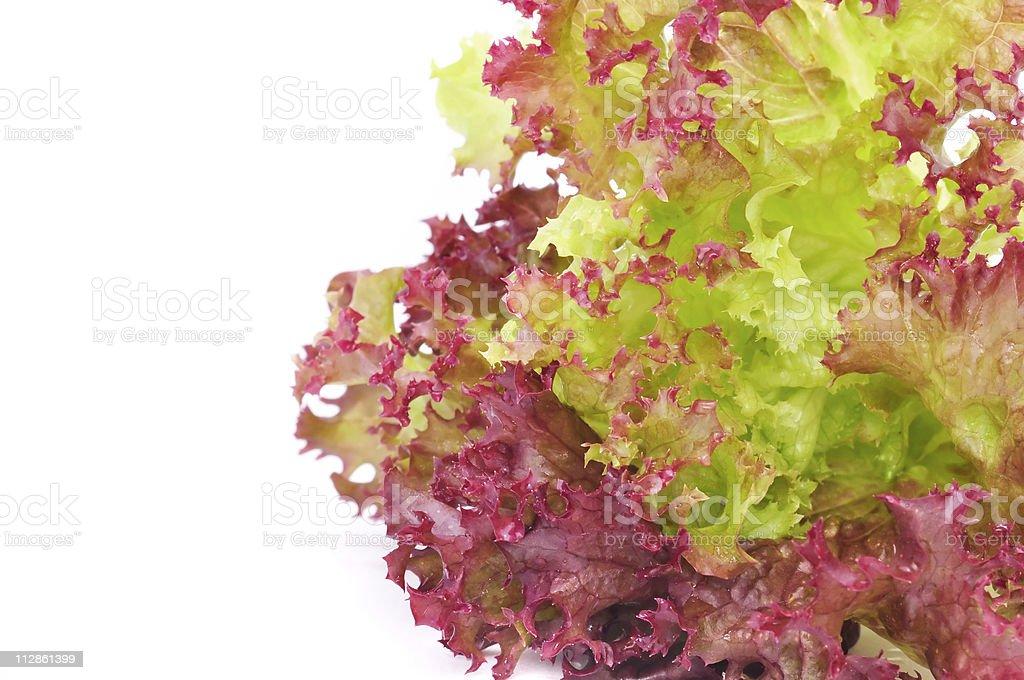 Bunch of Lettuce stock photo