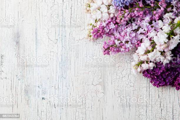 Bunch of lilac flowers on a white crackling effect background top picture id682343264?b=1&k=6&m=682343264&s=612x612&h=e1geb9ei un ljvguh1of3s92zavbpt816lu4c7xxem=