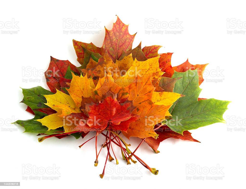 Montón de hojas de arce y colores otoñales - foto de stock
