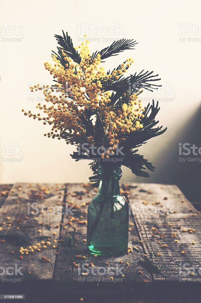 Bunch of mimosa in green bottle on rustic wooden table stock photo