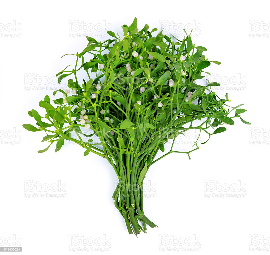 Bunch of mistletoe stock photo
