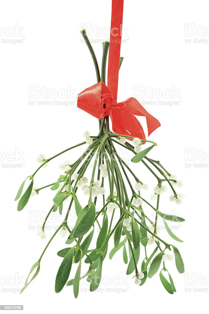 Bunch of mistletoe (Viscum album) with berries stock photo