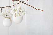 Bunch of of white  baby's breath flowers  in  egg shell