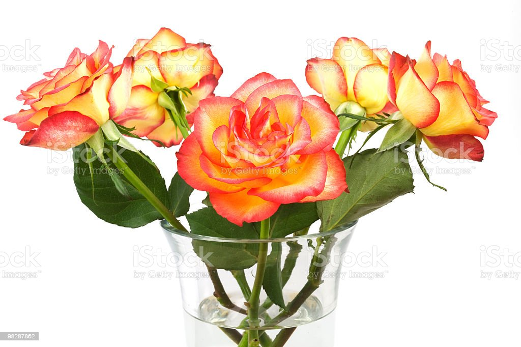 bunch of orange roses royalty-free stock photo